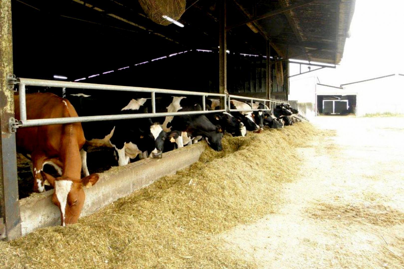 Produits laitiers de la ferme